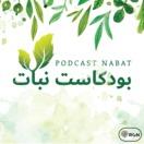 نبات | Nabat